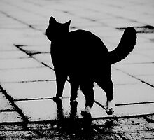 On Wet Paving by psychopu