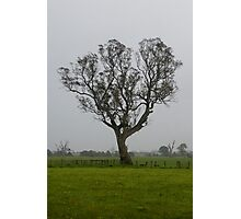 Share Favorite Thompsons Rd Tree - 2 Photographic Print