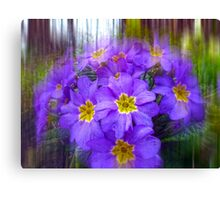 Striking Primulas Canvas Print