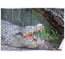 Gator 1 Poster