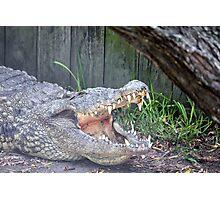 Gator 1 Photographic Print