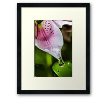 Water drop on Lilly  Framed Print