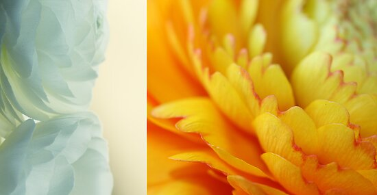 Spring diptych by Caterpillar
