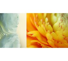 Spring diptych Photographic Print