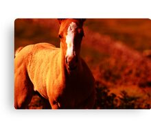 """""""Amber Colt"""" Nature Abstract Canvas Print"""