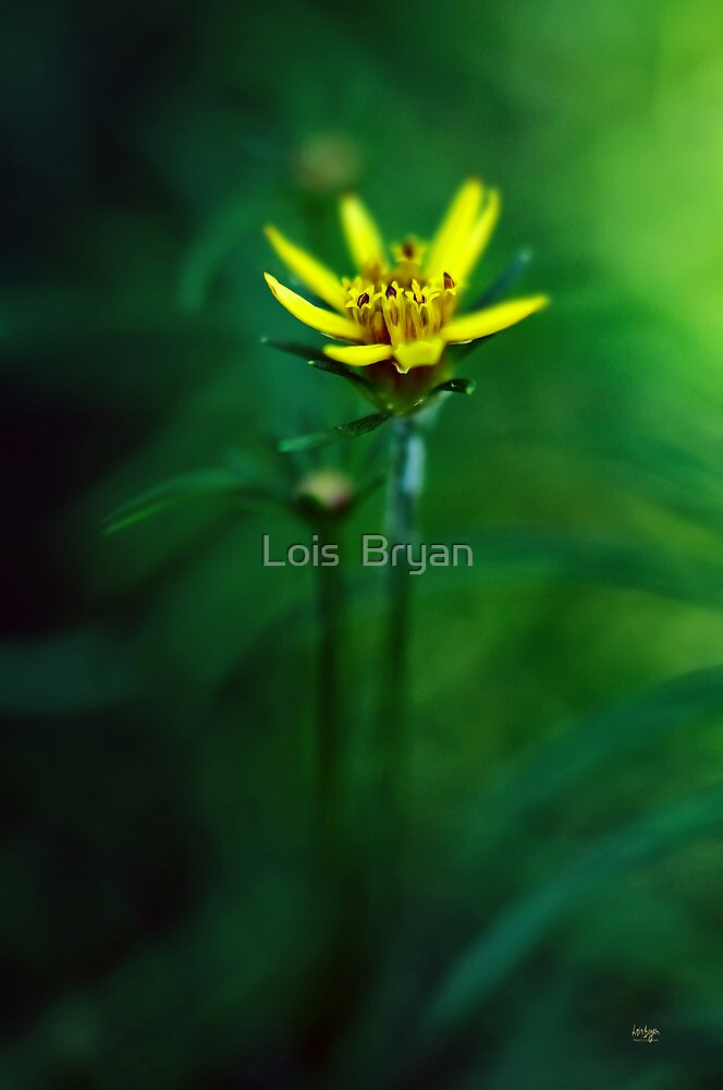 There's A Secret World by Lois  Bryan