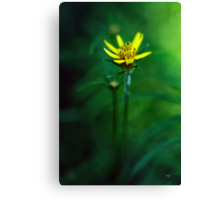 There's A Secret World Canvas Print