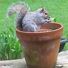 Breakfast in a Flower Pot by Pat Yager