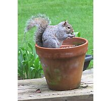 Breakfast in a Flower Pot Photographic Print