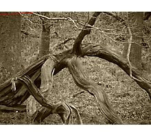 The Twists of Nature Photographic Print
