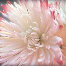 Flower by amyschuldies