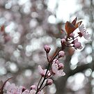 Crazy bokeh + blossoms by TheKoopaBros