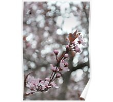 Crazy bokeh + blossoms Poster