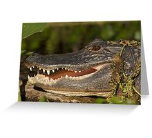 Alligator at Wekiwa Springs Greeting Card