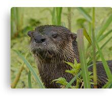 Otter on West Lake Toho Canvas Print