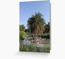 Flamingoes Greeting Card