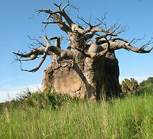 Baobab by reendan