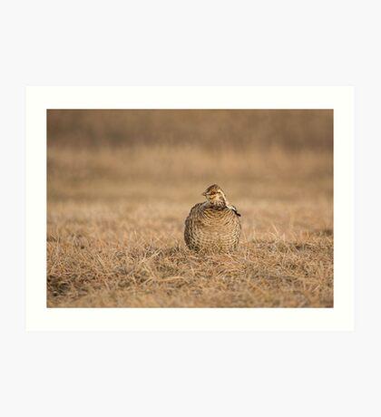 Prairie Chicken 2013-5 Art Print