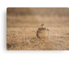 Prairie Chicken 2013-5 Metal Print
