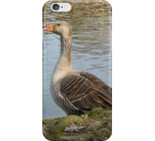 Lone goose on the Ouse  iPhone Case/Skin