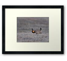 Prairie Chicken 2013-6 Framed Print