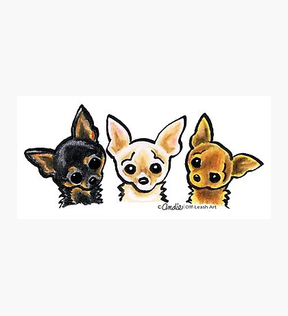 Smooth Chihuahua Trio Photographic Print