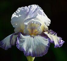 Iris time again by Kate Farkas