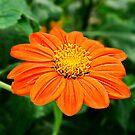 Orange Sunshine by Scott Mitchell