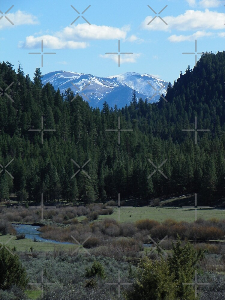 Spring on the River by Betty  Town Duncan