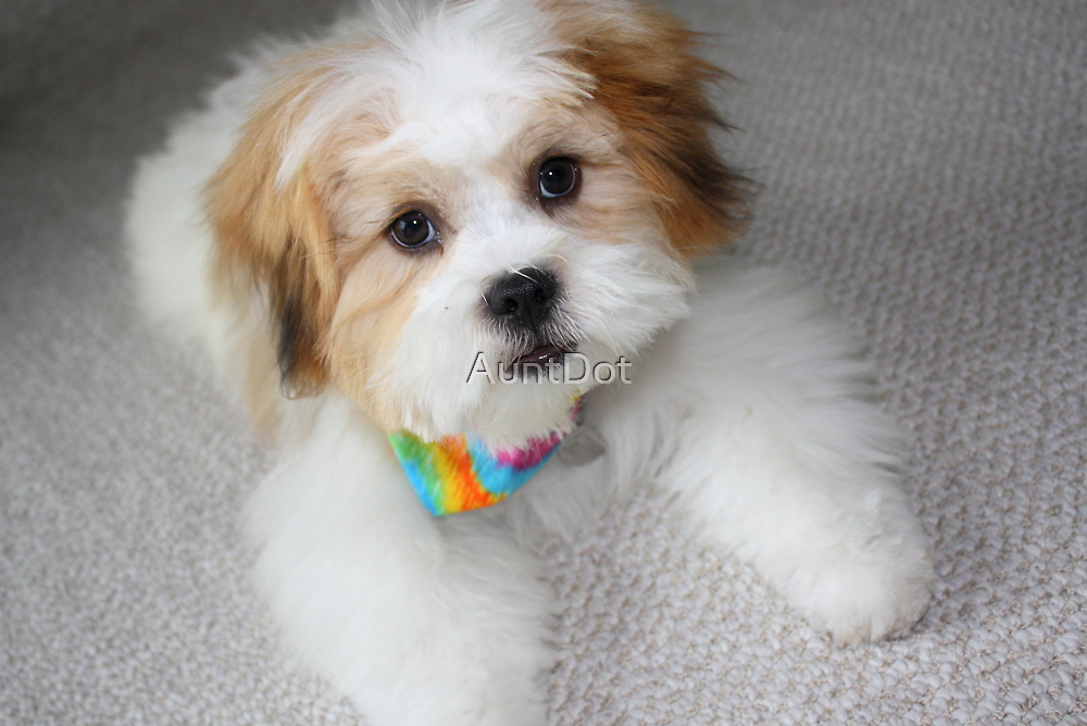 Daisy, Four Months Old by AuntDot