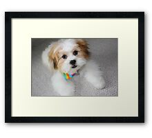 Daisy, Four Months Old Framed Print