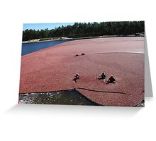 Cranberry Harvest Greeting Card