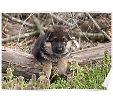 Puppy on a Log Poster