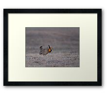 Prairie Chicken 2013-7 Framed Print