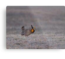 Prairie Chicken 2013-7 Metal Print