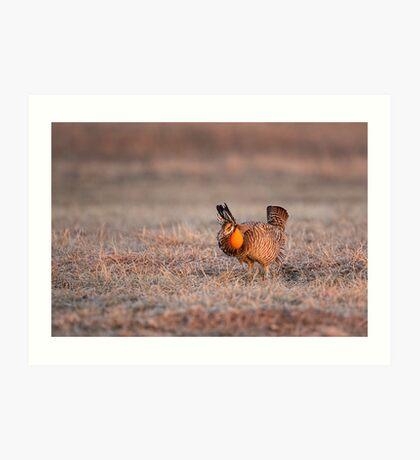 Prairie Chicken-8 Art Print