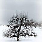 Winter Apple Tree by joycemlheureux