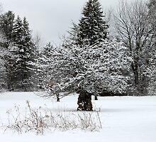 Winter Scene by joycemlheureux