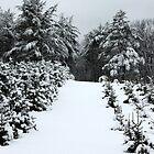 Christmas Tree Farm by joycemlheureux