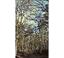 Blue Sky, Sherwood Forest Photographic Print