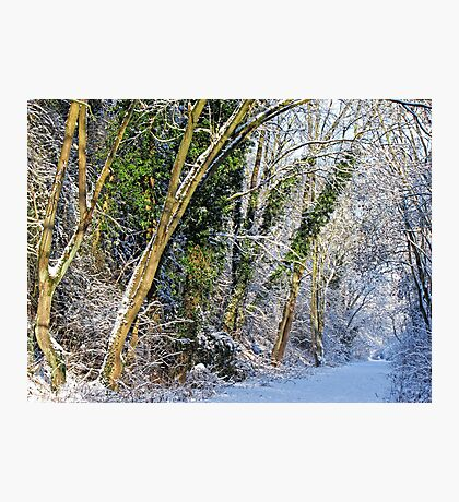 Winters Track Photographic Print