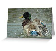 Washing Duck Greeting Card
