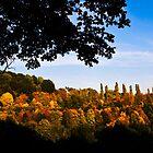"Panorama View ""Eifler Wald"" by Norbert Karpen"