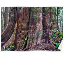 trunk (Vancouver Island rainforest) Poster