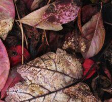 Collage Of Autumn Red Sticker