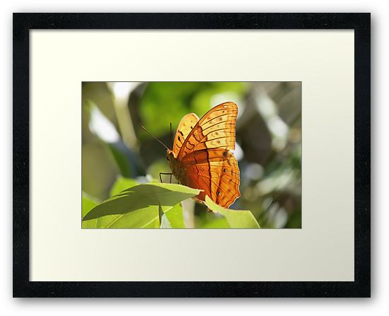 Orange Butterfly by Jola Martysz