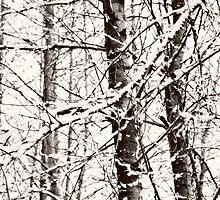 silent white tree~ by Brandi Burdick