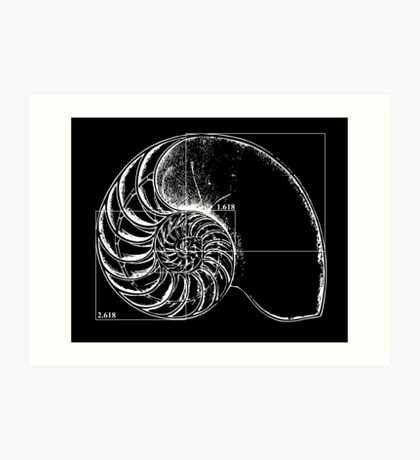 Fibonacci on a nautilus shell Art Print