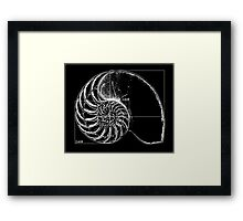 Fibonacci on a nautilus shell Framed Print