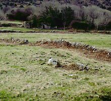 Burren Fields by CHINOIMAGES